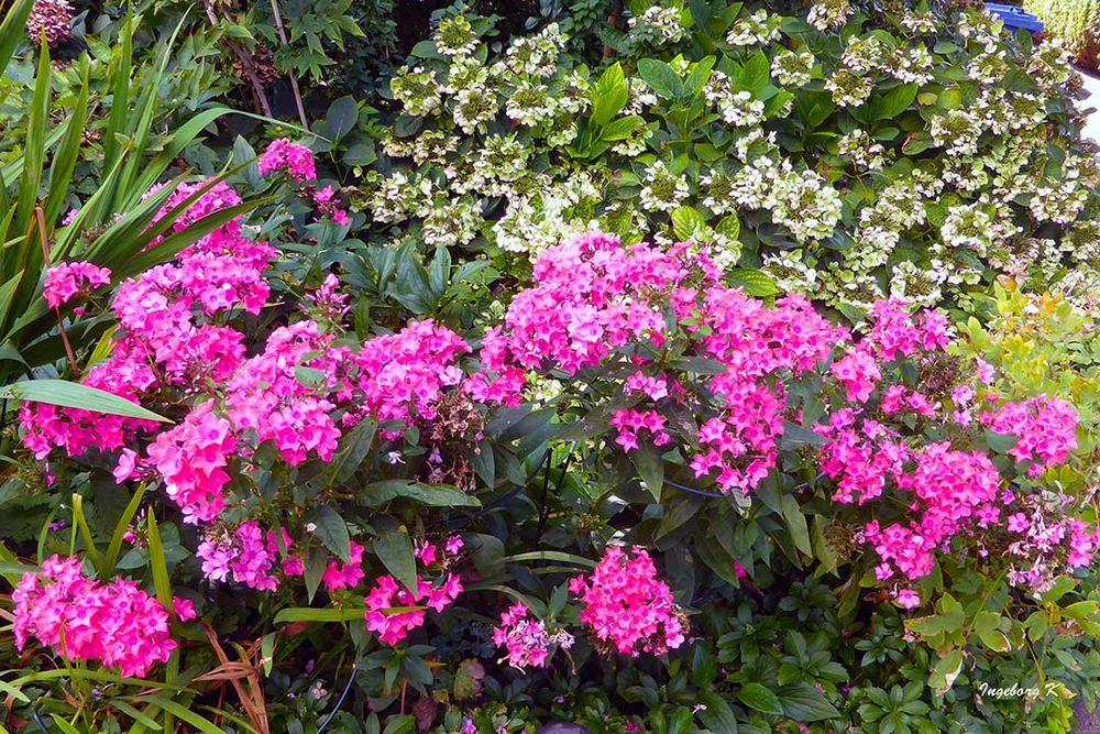 Blütenpracht Ende September in meinem Garten