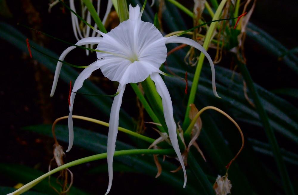 Blütenpracht im Botanischen Garten