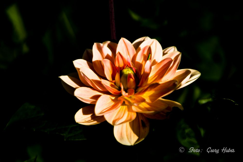 Blütenpracht im Dunkeln