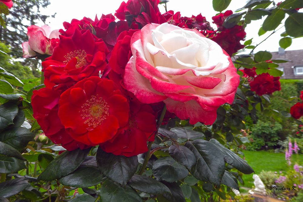 Blütenpracht im Mai und Juni