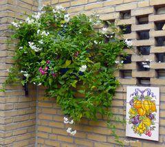Blütenpracht im Oktober