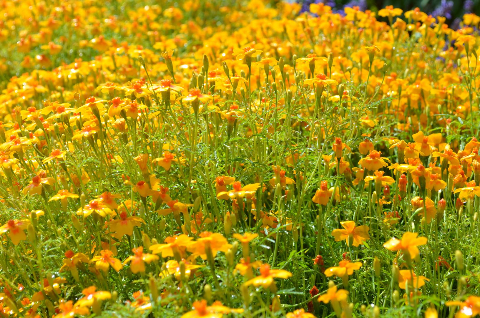 Blütenpracht im Schlosspark Schwerin