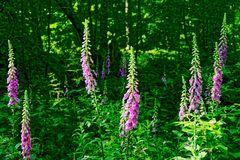 Blütenpracht im Wald