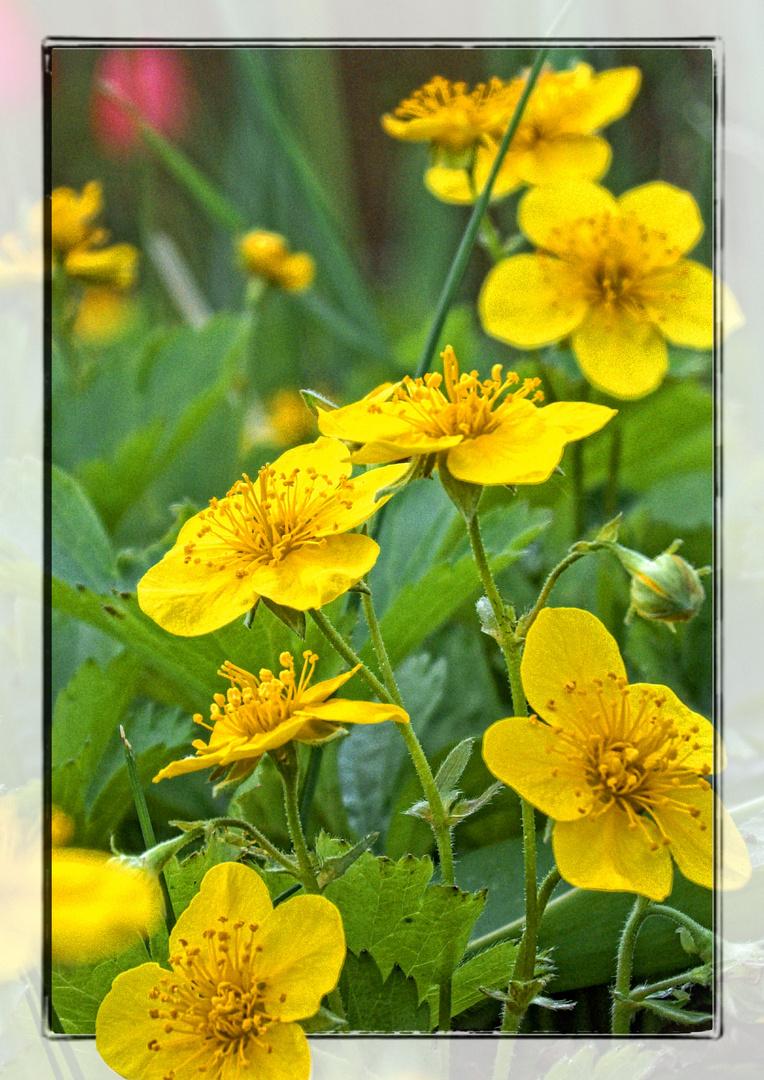 Blütenpracht in Gelb