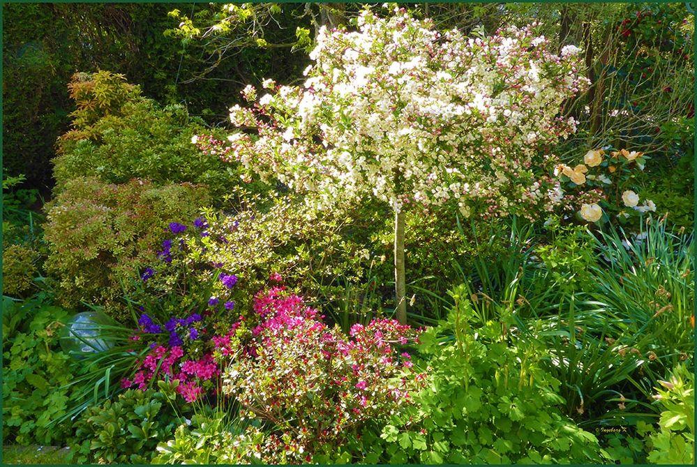 Blütenpracht in meinem Garten im April