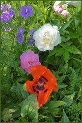 Blütenpracht in meinem Garten im Mai