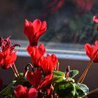 Blütenpracht in Rot