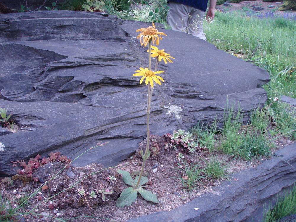 Blütenpracht vor langweiligem Stein