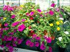 Blütenpracht zu Pfingsten
