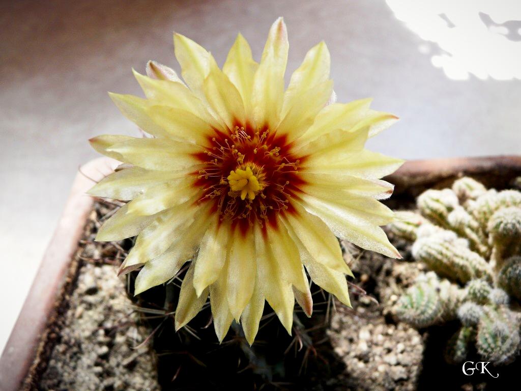 Blütenpracht_2