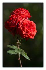 Blütenprachtvoll
