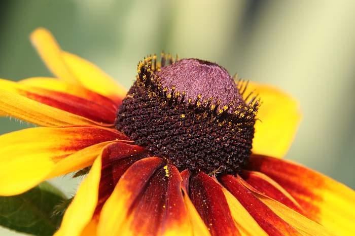 Blütenprofil