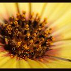 BlütenPuder