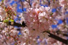 Blütenrausch