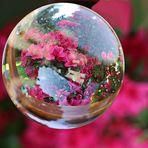Blütenrausch in der Kugel