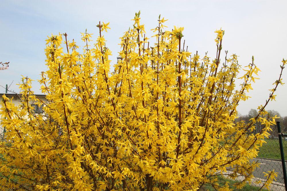 Blütenrausch in Gelb