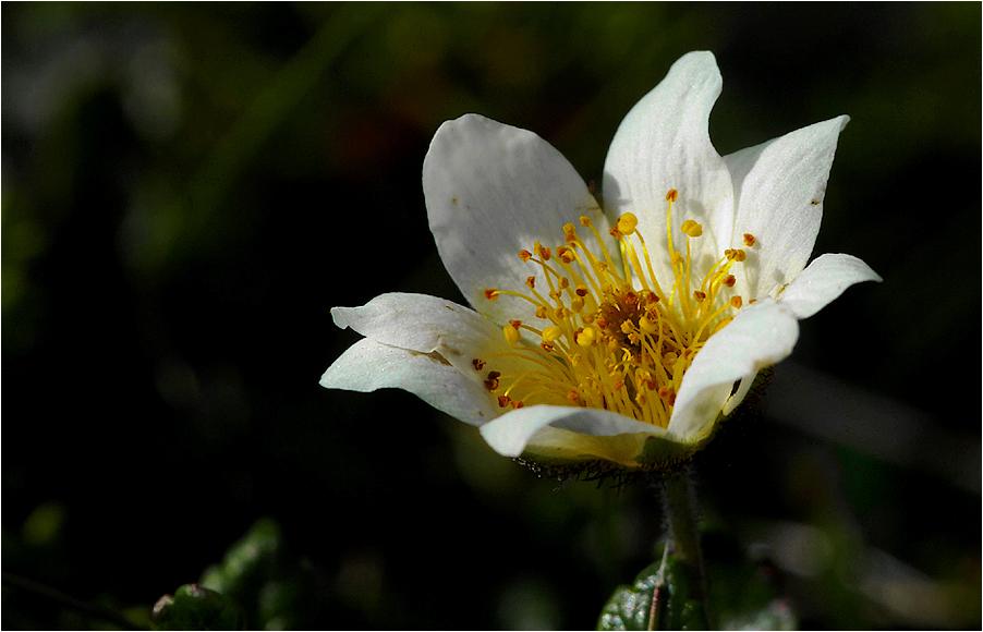 Blütenreich...