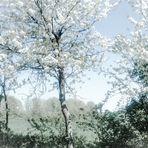 Blütenreich ...
