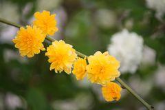 Blütenreigen