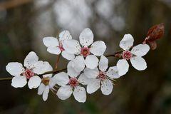 Blütenrein weiß
