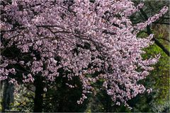 Blütenschwall