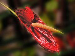Blütenschweif