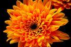 Blütenspiel in gelb-orange
