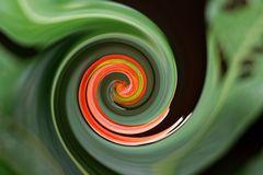 Blütenspirale