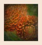 - Blütenspiralen -