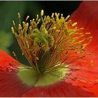 Blütenstempel II