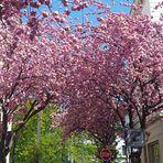 Blütenstraßen mit Grün