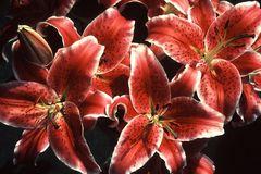 Blütenstrauss