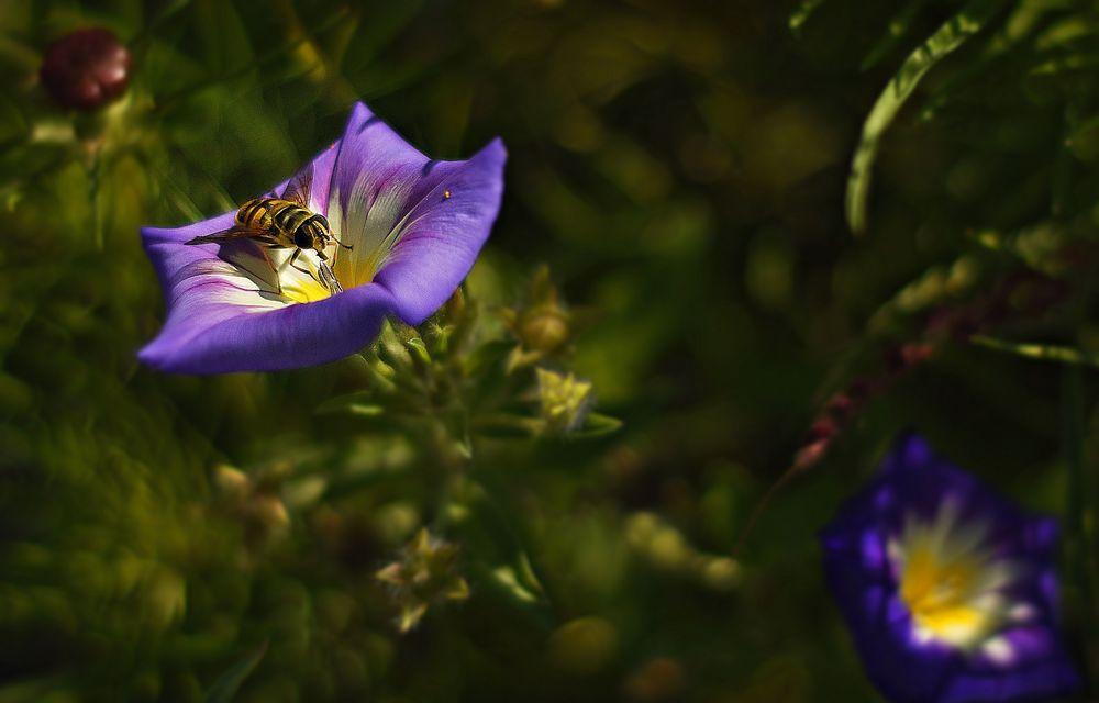 Blütensucher,Blütenbesucher ...