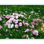 Blütenteppich...