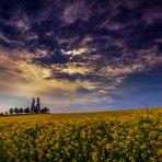 --- Blütenteppich ---