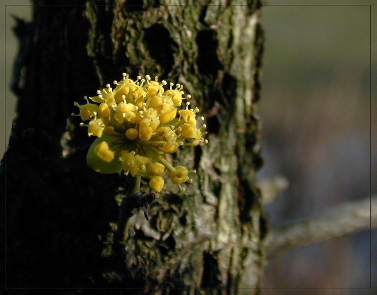 Blütenträumchen