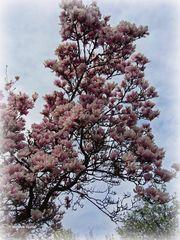 Blütenträume - 1 -