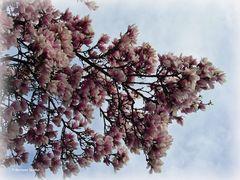 Blütenträume - 2 -
