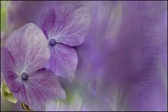Blütenträume..