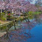 Blütenträume am Wasser