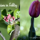 Blütenträume im Frühling 2015