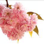 Blütenträume werden wahr