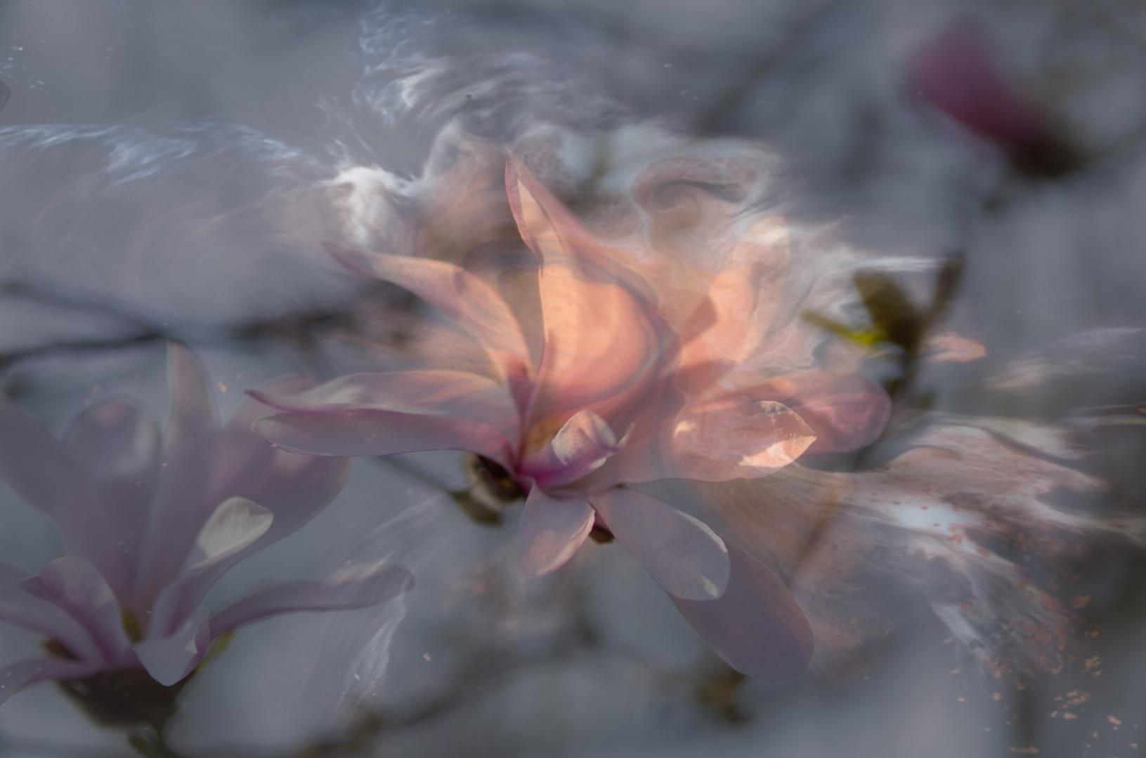 ....Blütenträume...leicht wie der Wind...