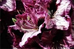 Blütentraum ....
