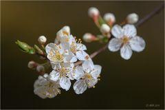 Blütentraum - 2
