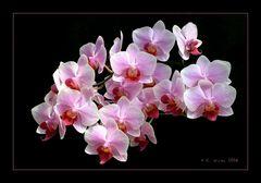 *Blütentraum*