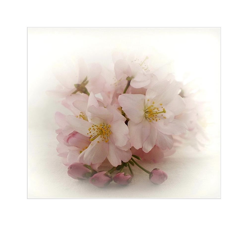 * Blütentraum *