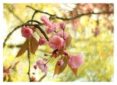 """Blütentraum"""