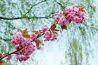 Blütentraum ...