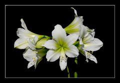 Blütentraum II